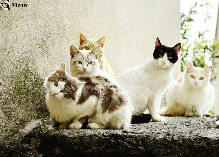 Meow😸 https://www.youtube.com/c/WeMeow #cat #cats #wemeow #meow #catlife #cutecat #catlove #lovecats #gatos #gatti #koty #katze #chats #kitty #kitten #kittens #lovecat #funnycat #cateye #beautifulcat #nicecat #amazingcat #catlooking #catofinstagram #catsoftumblr #catstagram #instapets #instacat #pet #pets