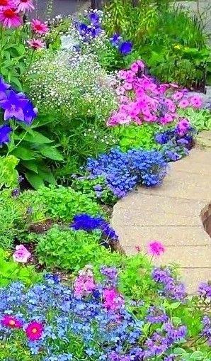 Colorful garden perennial border.