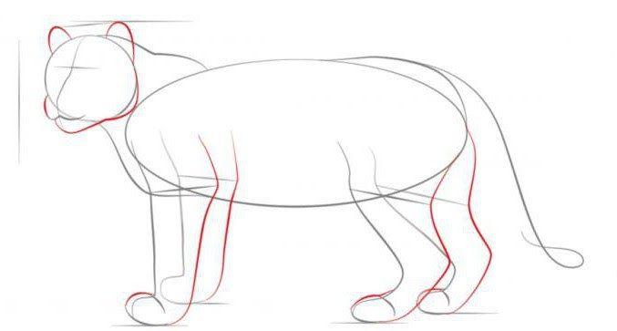 Cara Gambar Macan Tutul Ingatlah Bahwa Ini Hanya Pensil Yang Saya Akhirnya Menggunakan Hewan Hewan Eksotis Juga Dipamerk Gambar Cara Menggambar Macan Tutul