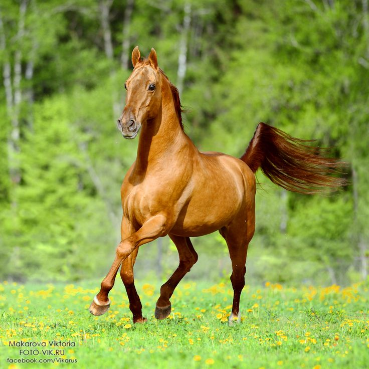 Фотографии лошадей 2013 - 2014 / photo of the horses 2013 - 2014