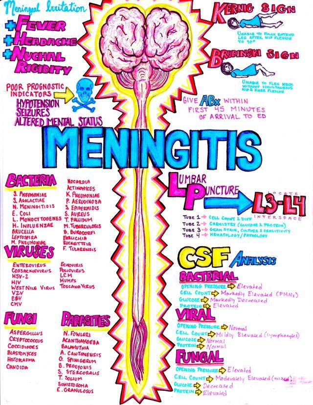 Neurology Notes Hanson S Anatomy The Most Vibrant Med