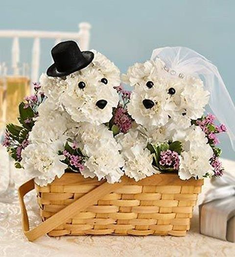 dog flower arrangement instructions