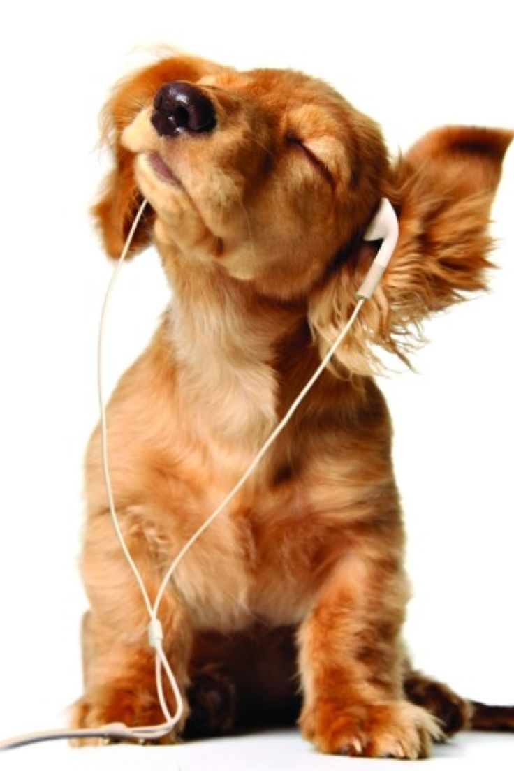 Hey I M Listnen To Music Speak The The Hand Puppies Cute Puppies Cute Animals