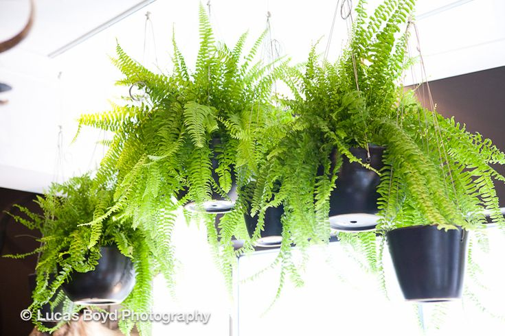 Hanging pots at Sydney shop Garden Life via WeeBirdy.com.