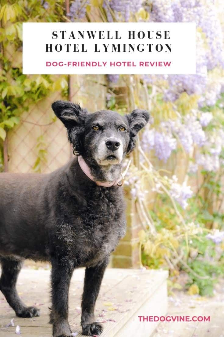 A Warm Welcome At The Dog Friendly Stanwell House Hotel Lymington Dog Friends Dogs Dog Friendly Hotels