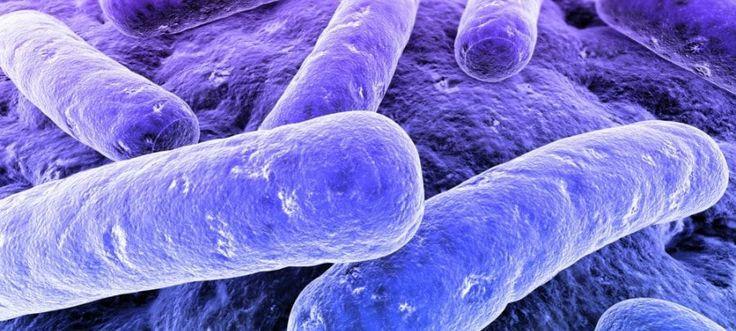 Microbiota: siamo praticamente fatti di microrganismi!