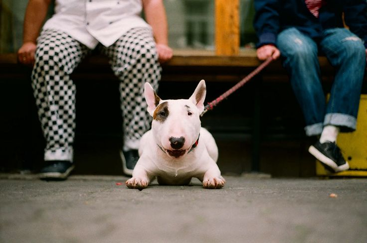 "Check out my @Behance project: ""fat cat lifestyle by wojciech barczuk"" https://www.behance.net/gallery/48841993/fat-cat-lifestyle-by-wojciech-barczuk #bullterrier #bull #dog #street #filmphotography #inspiration #session #lifestyle #photoshoot #editorial #kodak"