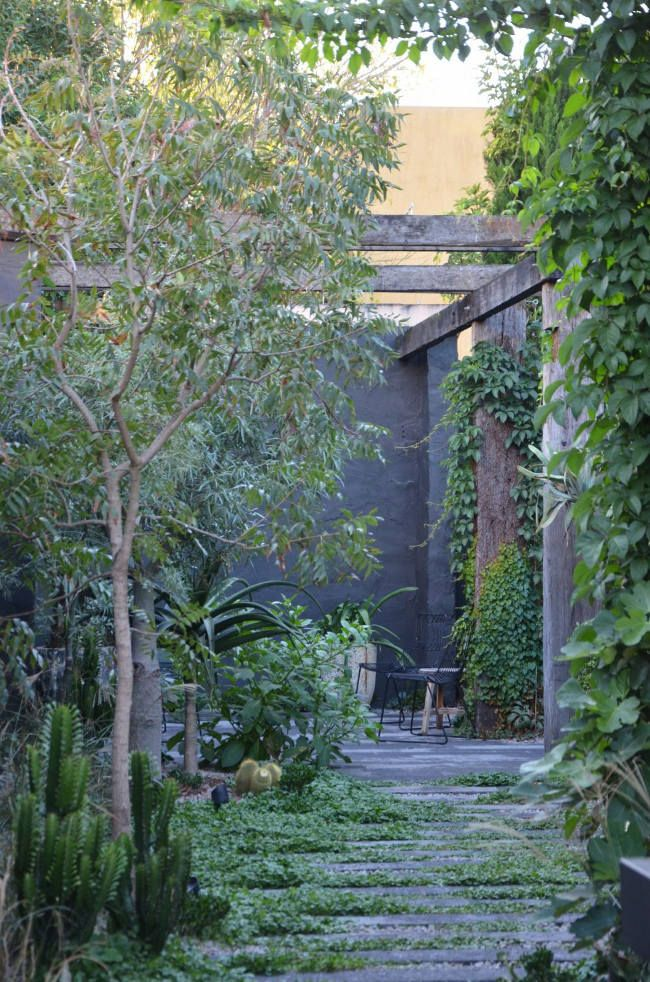 No not juicy and lip smacking. No, succulent as in the plant. An inner city Melbourne backyard ...