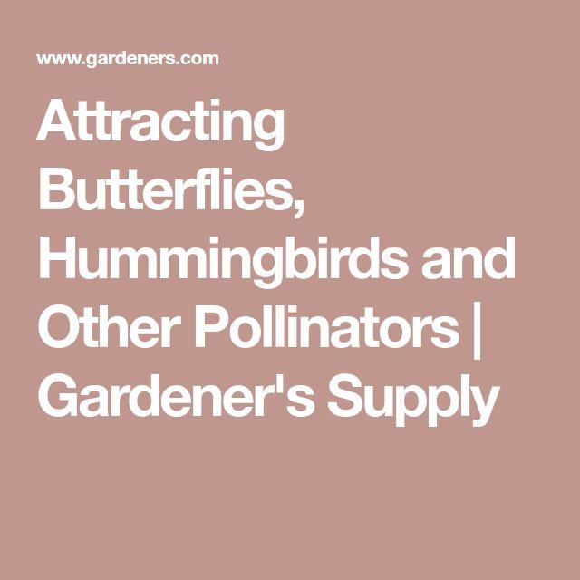 Attracting Butterflies, Hummingbirds and Other Pollinators | Gardener's Supply