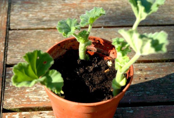 A zölddugvány készítése nagyon egyszerű, ezt szeretném most bemutatni a kísérletező kedvű kertészkedőknek. Megéri ezt tudni!