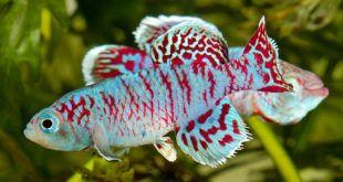 Parece contraditório, pois ambos os sistemas tem estrelas diferentes, no de jumbos os peixes são o principal elemento, no aquário plantado são as plantas.