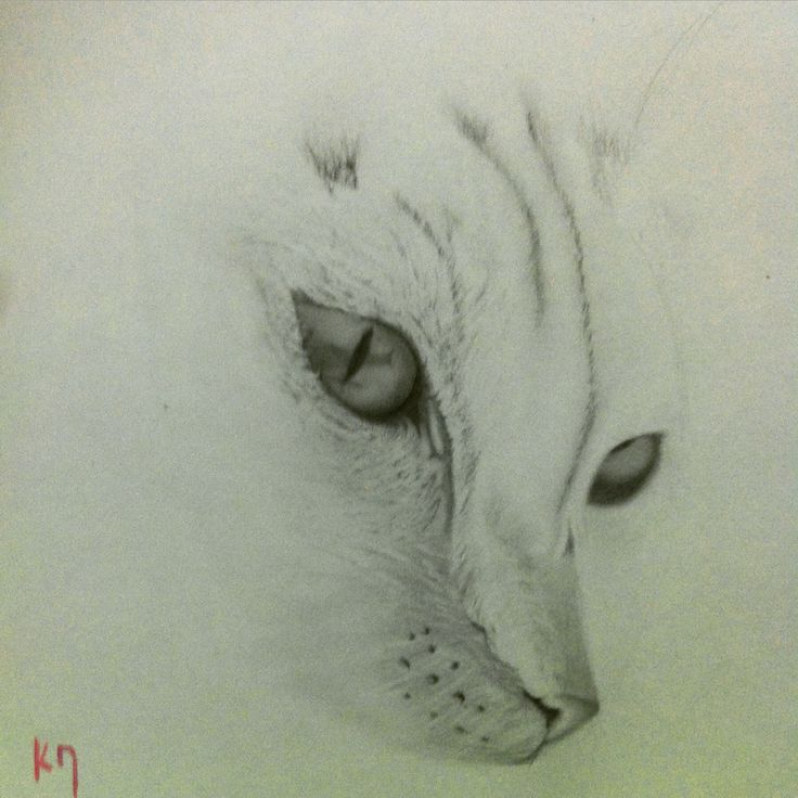 Le chat Graphite on paper