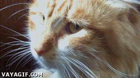 http://statics.vayagif.com/gifs/2013/12/GIF_186032_cuando_veo_a_dos_personas_besandose_en_la_calle.gif