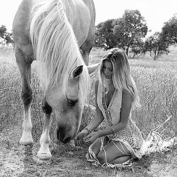 best 10 cheval noir et blanc ideas on pinterest chevaux blancs