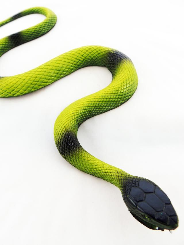 11 Best Snakes Images On Pinterest Pest Control Poisonous Snakes And Snakes