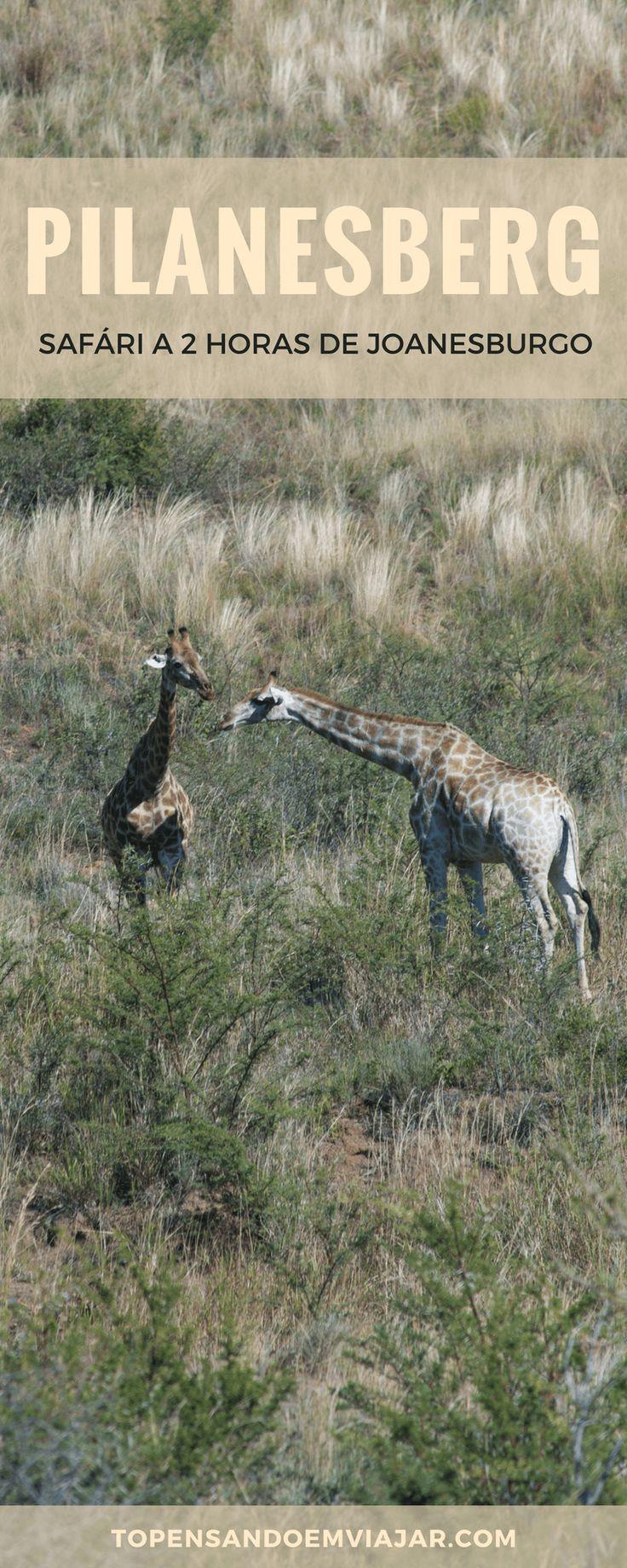 Quer aproveitar uma rápida escala em Joanesburgo e fazer um safári na África do Sul?! Você TEM que conhecer o Pilanesberg Park!