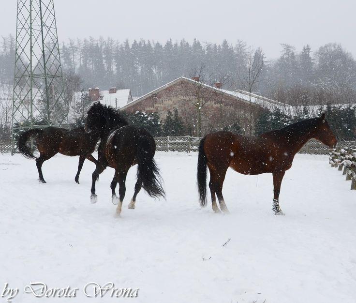 Konie-by Dorota Wrona