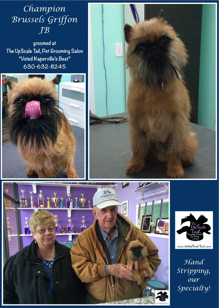 15 best community giving the upscale tail dog groomers naperville welcome to the upscale tail the best award winning certified pet grooming salon in naperville il with over 50 years combined experience in the industry solutioingenieria Choice Image