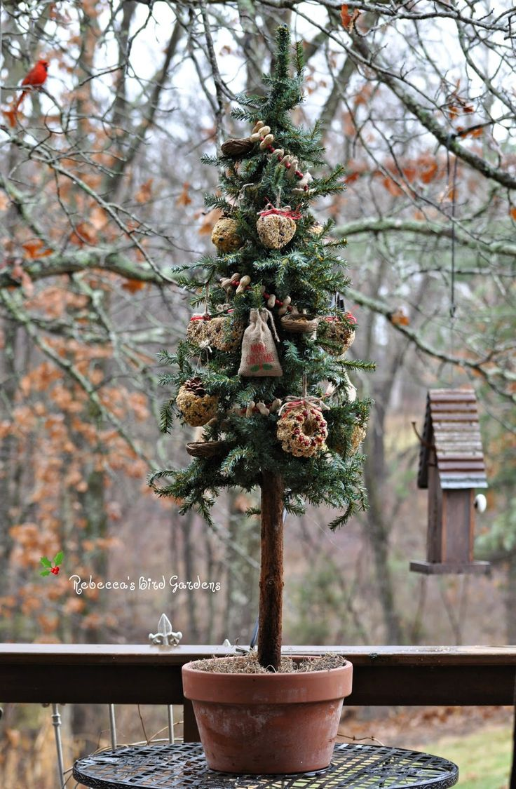 Rebecca's Bird Gardens Blog: A Christmas Tree for the Birds!