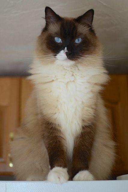 ou alors un petit chat à la maison...?