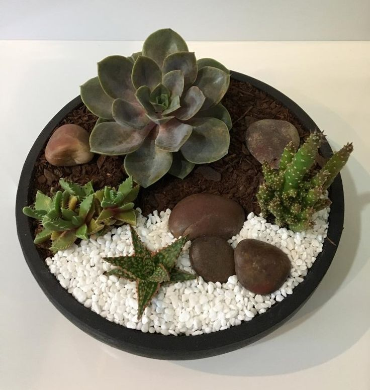 Collection of Cacti & Succulent in low black pot. Perfect for that undercover outside table.