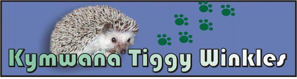 USDA licensed Hedgehog Breeder in Tacoma