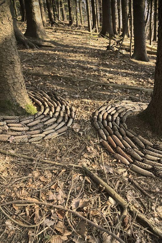 """""""Lasst die Sonne in den Wald"""" trockene Fichtenzwei…"""