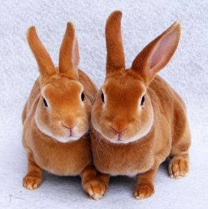 Picture of two Cute Little Rabbits