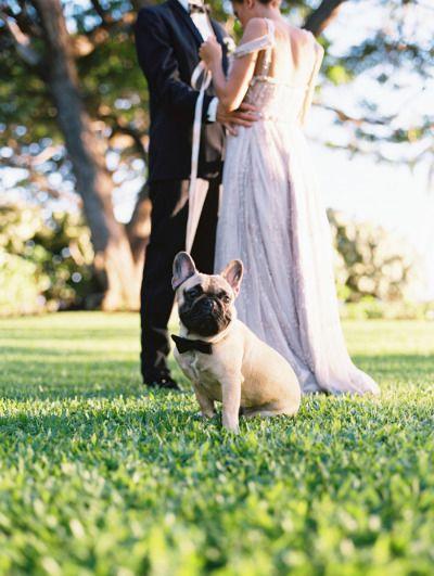 Frenchie! http://www.stylemepretty.com/destination-weddings/2015/04/24/whimsical-elegant-backyard-wedding-inspiration/   Photography: Wendy Laurel - http://www.wendylaurel.com/