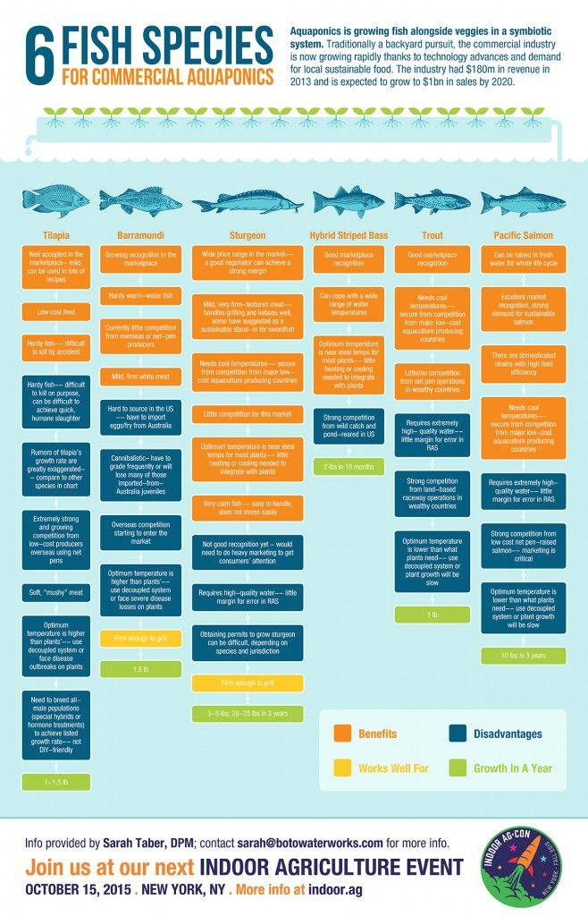 Infographic: Six Fish Species for Commercial Aquaponics | Aquaponics | Pinterest | Aquaponics, Commercial aquaponics and Aquaponics system