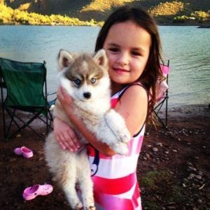 Dogs with unique personalities are #pomsky dogs  Full grown Siberian Husky and #FullgrownPomeranian are breeds which when combined provide genetic new genes of the breed known as the pomsky dog breed. pomeranian husky for sale are available at pomskies  http://www.pomskies.com/