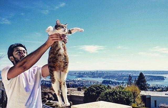 #kucingbikingemes ini kiriman dari : @peshghi    punya #kucingbikingemes juga? follow dan tag @kucingbikingemes  jangan lupa pakai #kucingbikingemes   via #catsofinstagram #cat #cats #catofinstagram #cat_of_instagram #catstagram #catsoftheworld #catslover #catgram #catagram #catslife #kucing #kucingku #kucinglucu #kucingsaya #kucingimut