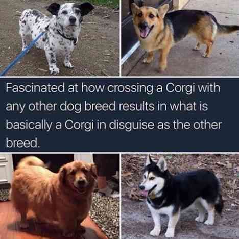 this is so true | TrendUso    #dog #dogs #corgi #corgis #mixedbreed #breed #husky #goldenretriever #amazing #funny #hilarious #humor #humorous #humour…