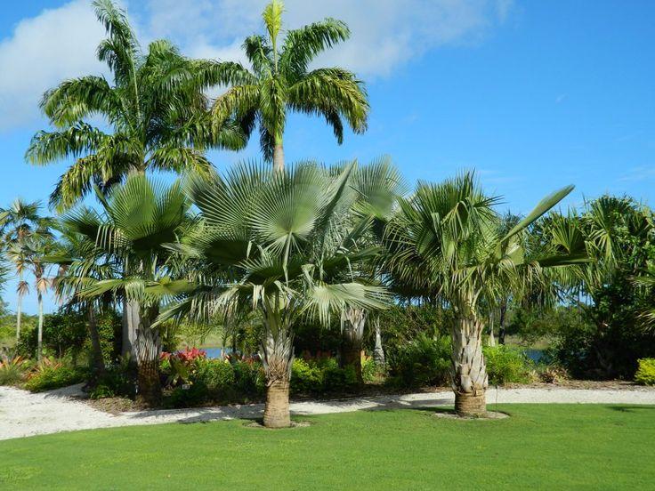 19 Best Naples Botanical Garden Images On Pinterest Toronto Botanical Gardens And Naples Florida
