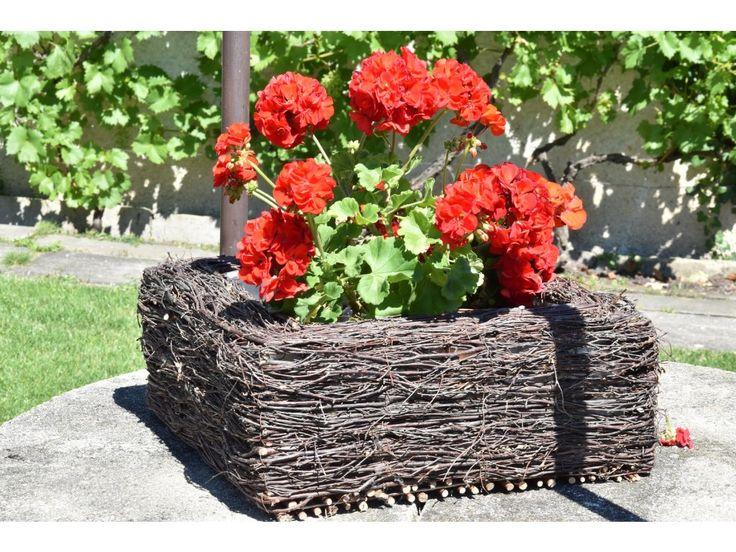 Hranatý truhlík březový . Krásný čtvercový obal z břízy, který se bude na zahradě výjímat.