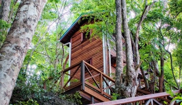 Ti-fèy Bungalow, Dominica >> This looks like a very cool place to stay! #JetsetterCurator: Trees Houses, Bungalows Dominica, Ti Fèi Bungalows, Bungalows Secret, Crusoe Treehouse, Tifèi Bungalows, Travel Ideas, Secret Bays, Cool Places