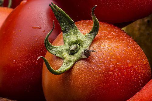 Tomato macro