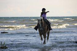 Horseback Riding Ontario