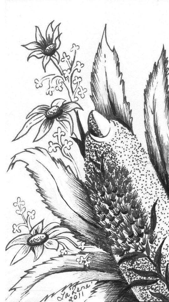 Pencil Sketch - Australian Native Flowers By La Rene (C)   Art   Pinterest   Sketches Flower ...