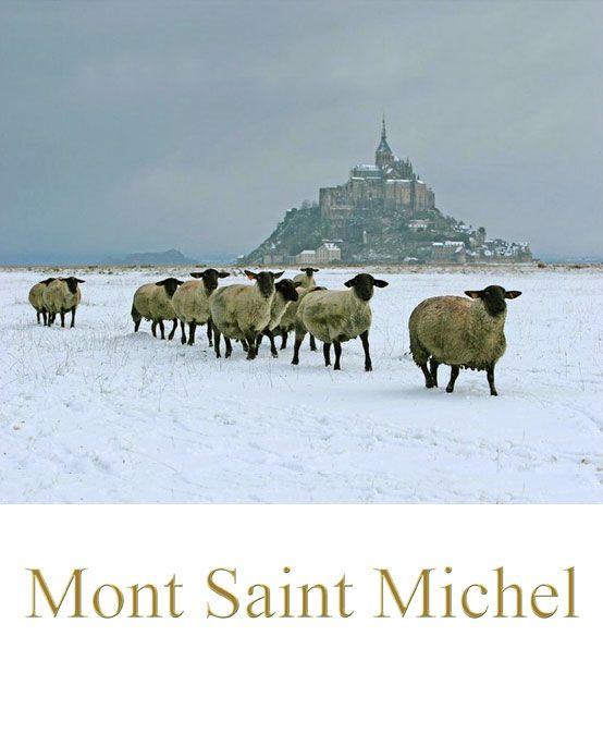 Mont Saint Michel sous la neige ~ France ~ Les moutons à têtes noires!