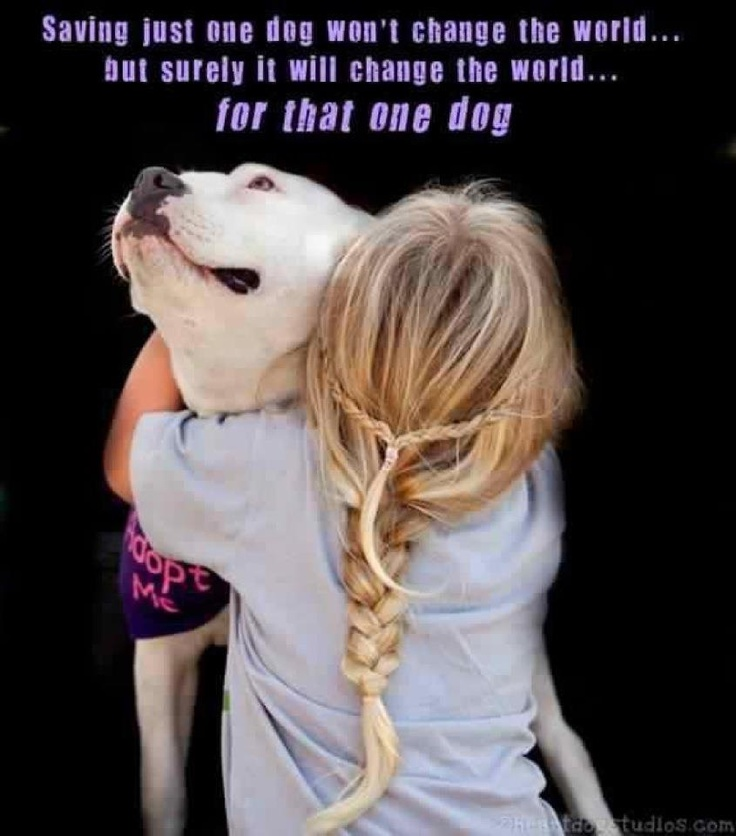 agreed.Rescue Dogs, Animal Shelters, Adoption A Dogs, Little Girls Hair, Quote, Pitbull, Change The World, Pit Bull, Shelters Dogs