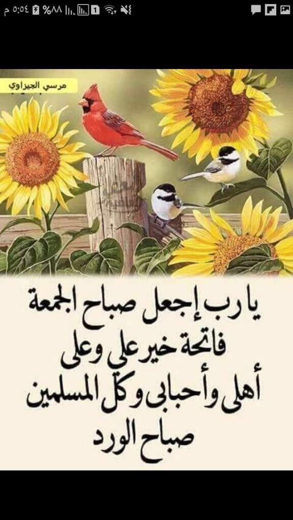 صباح الخير القدس جمعة مباركة Rooster Animals Islam