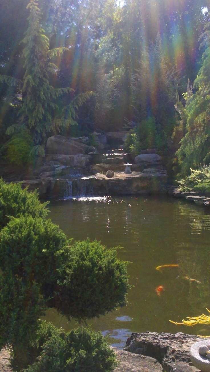 19 best images about pond lights on pinterest gardens for Beautiful koi ponds