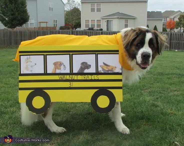 20 Costumes That Are Perfect For Big Dogs | Cuteness.com