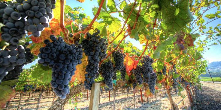 Amazing Wine Country Destinations | Visit California