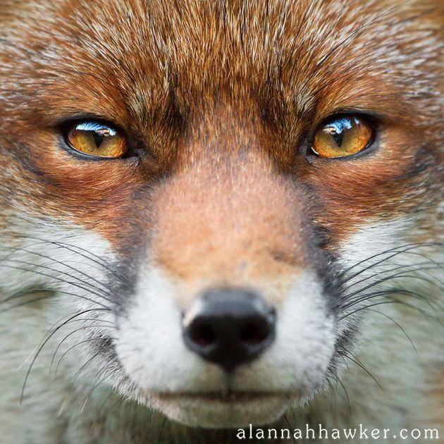 name fox eyes -#main