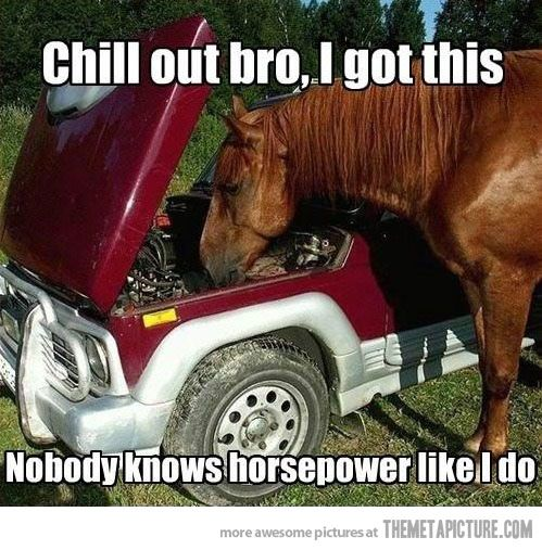Google #Image Result for http://static.themetapicture.com/media/#funny-#horse-fixing-car.jpg