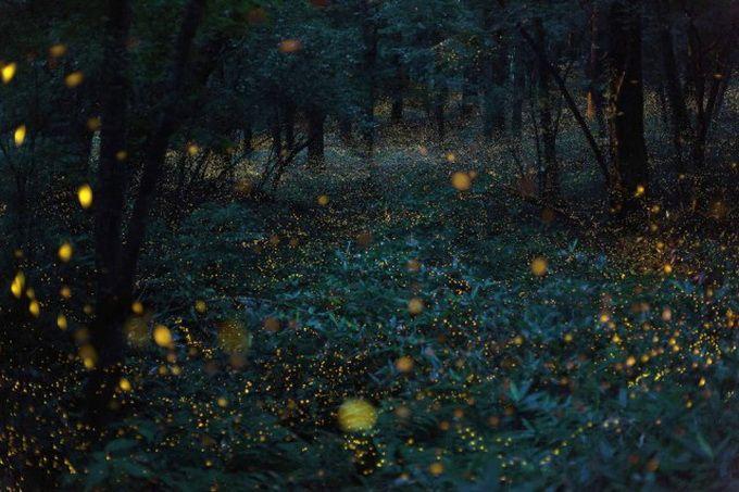 Naturelles Lights Japan5 Photographe Takehito Miyatake est spécialisée dans les images avec vitesse d'obturation lente pour obtenir les images irréalistes. Il a récemment remporté le Grand Prix du Nikkei Prix nationaux-2014 géographique photos .