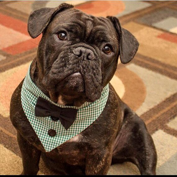 Tie on dog Tuxedo Bandana Green & White Gingham made to order