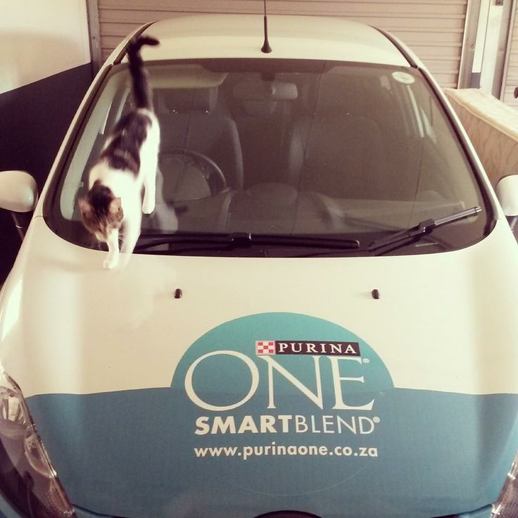 Meagan's owner and her Purina One ride!
